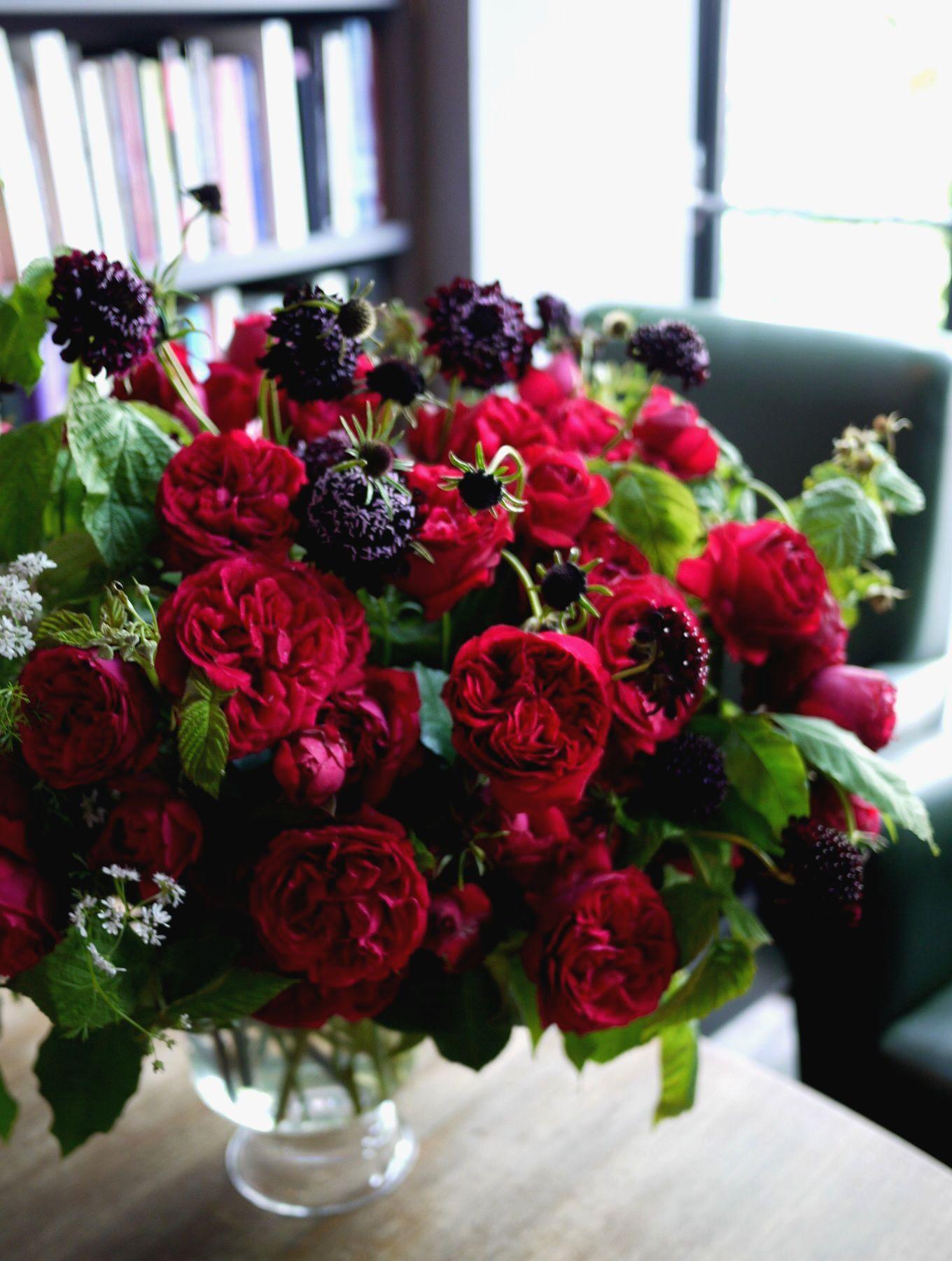 rose, coriander, scabieuse,