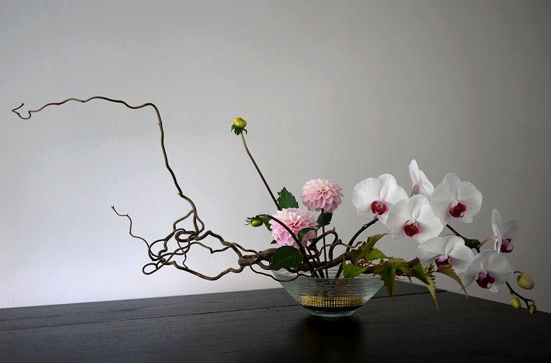 dahlia, orchidée,