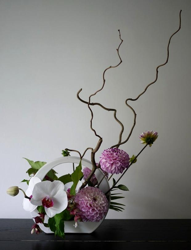 orchidée, dahlia,
