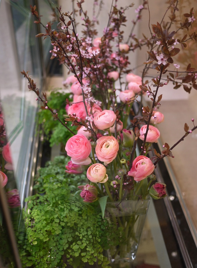 prunus, renoncule, tulipe,