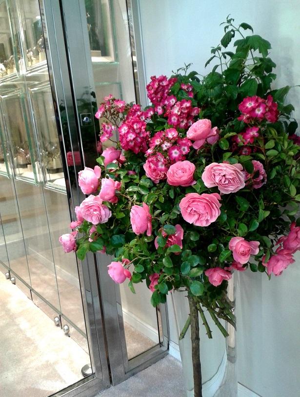 rose, viburnum,