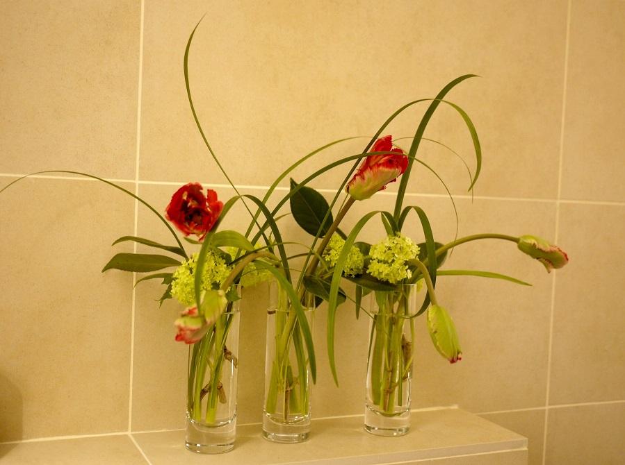 camélia, tulipe, viburnum,