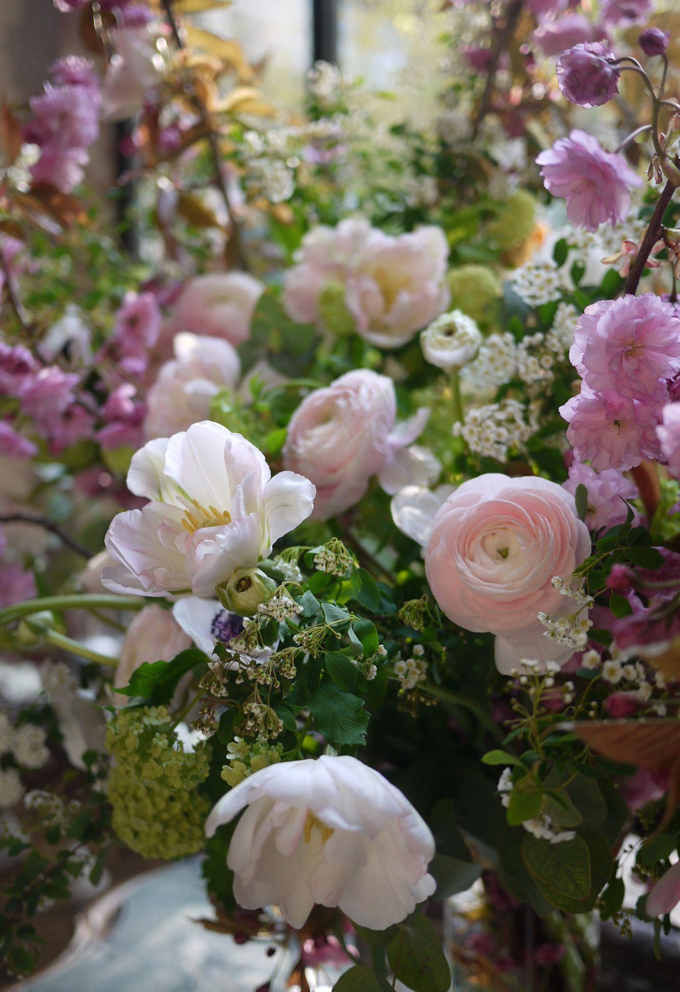 tulipe, anémone, renoncule, spirée, cerisier, viburnum,