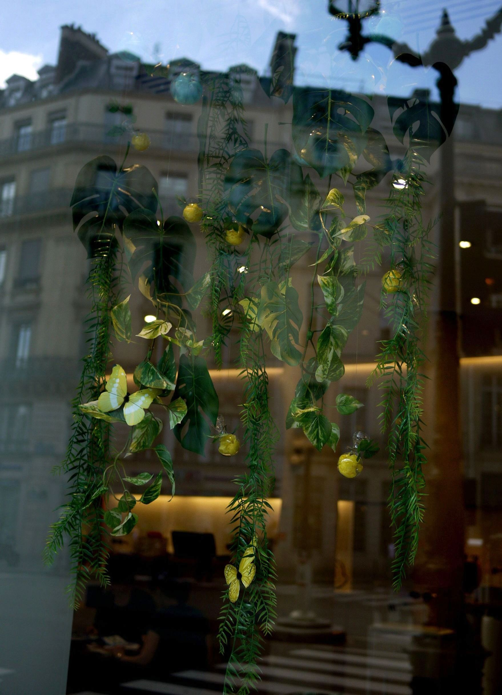 decoration vitrine